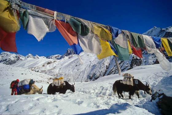 Gebetsfahnen auf dem Weg nach Gokyo, Solu Khumbu, Nepal